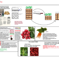 Guide to growing food